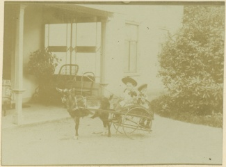 Kinderen op geitenwagen